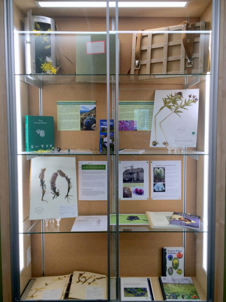 photo of herbarium display