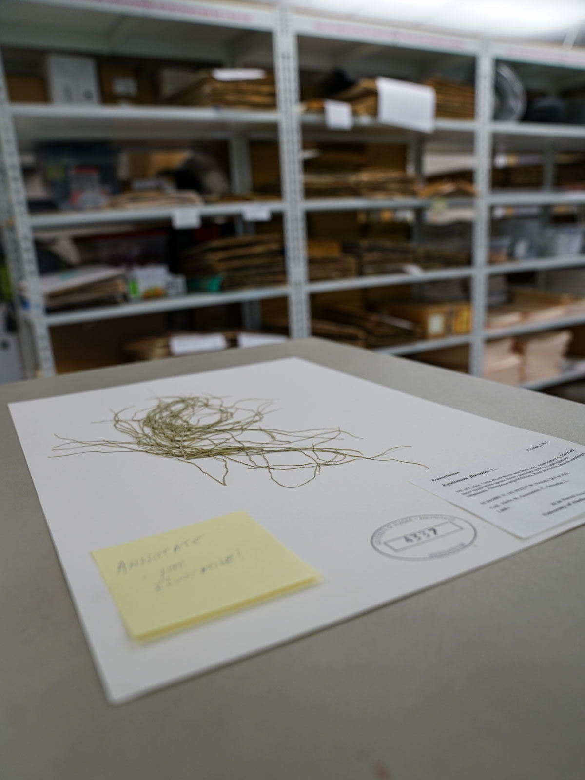 vegetation sample in the UAA Herbarium