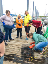 Photo of kbnerr researchers educating about European Green Crabs