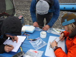 ACCS researchers in the field conducting studies