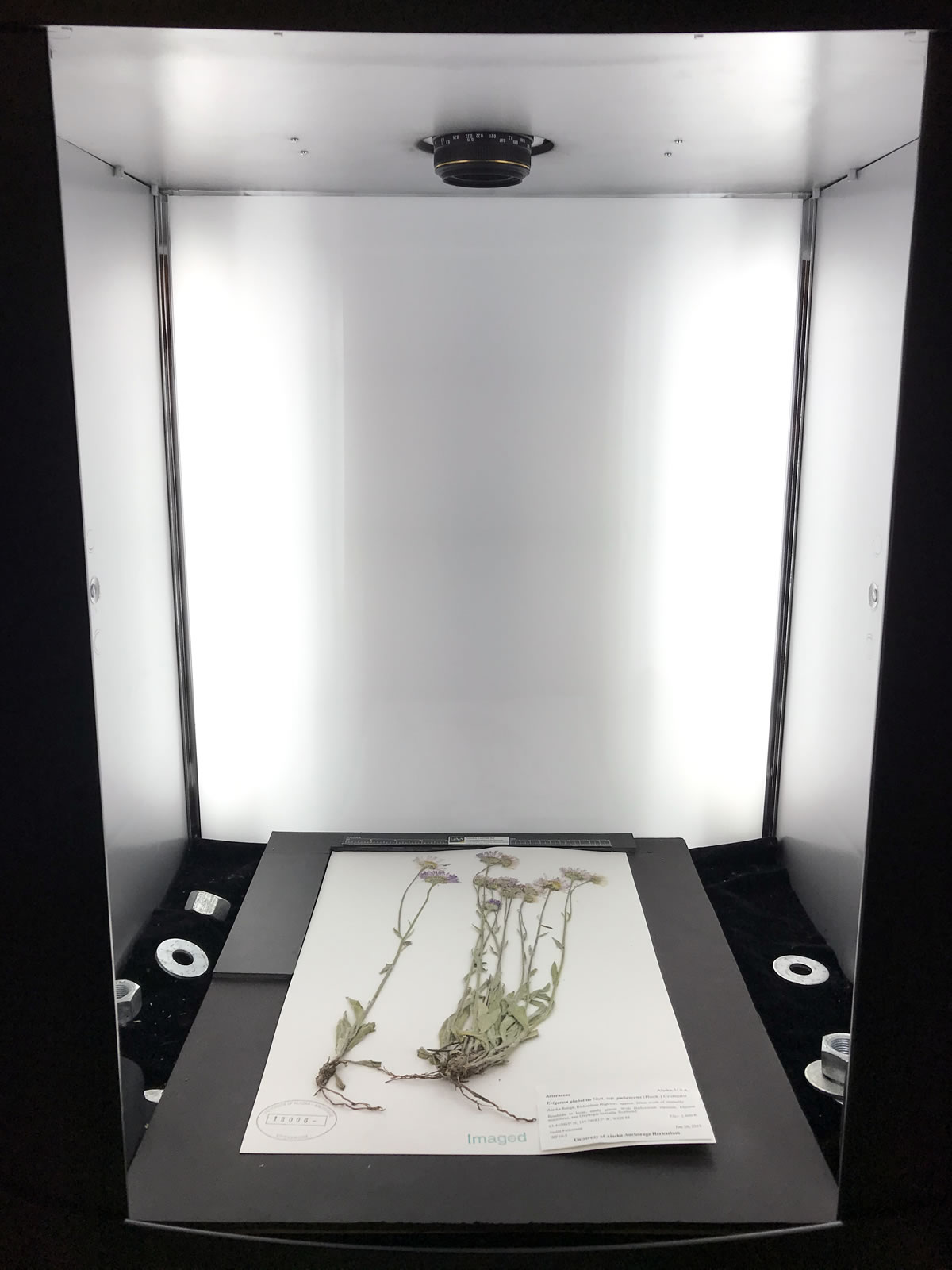 Photo of a plant sample in lightbox in the Herbarium